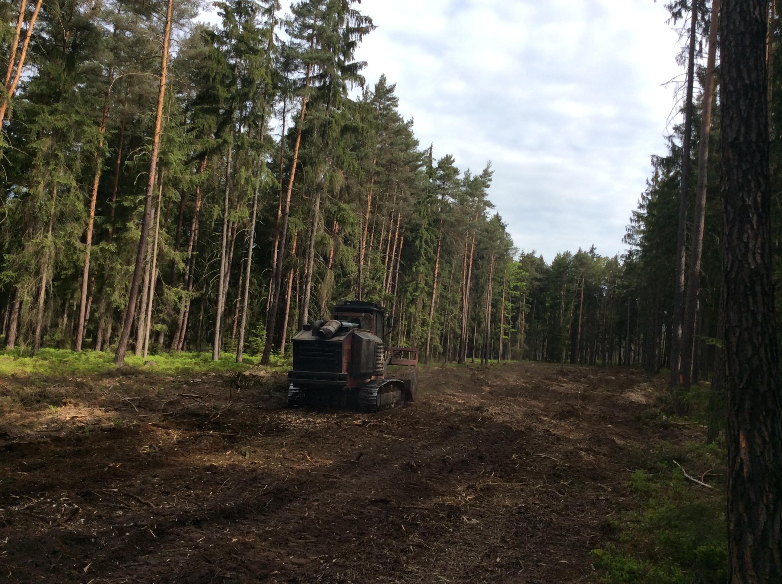 Práce na likvidaci lesního náletu