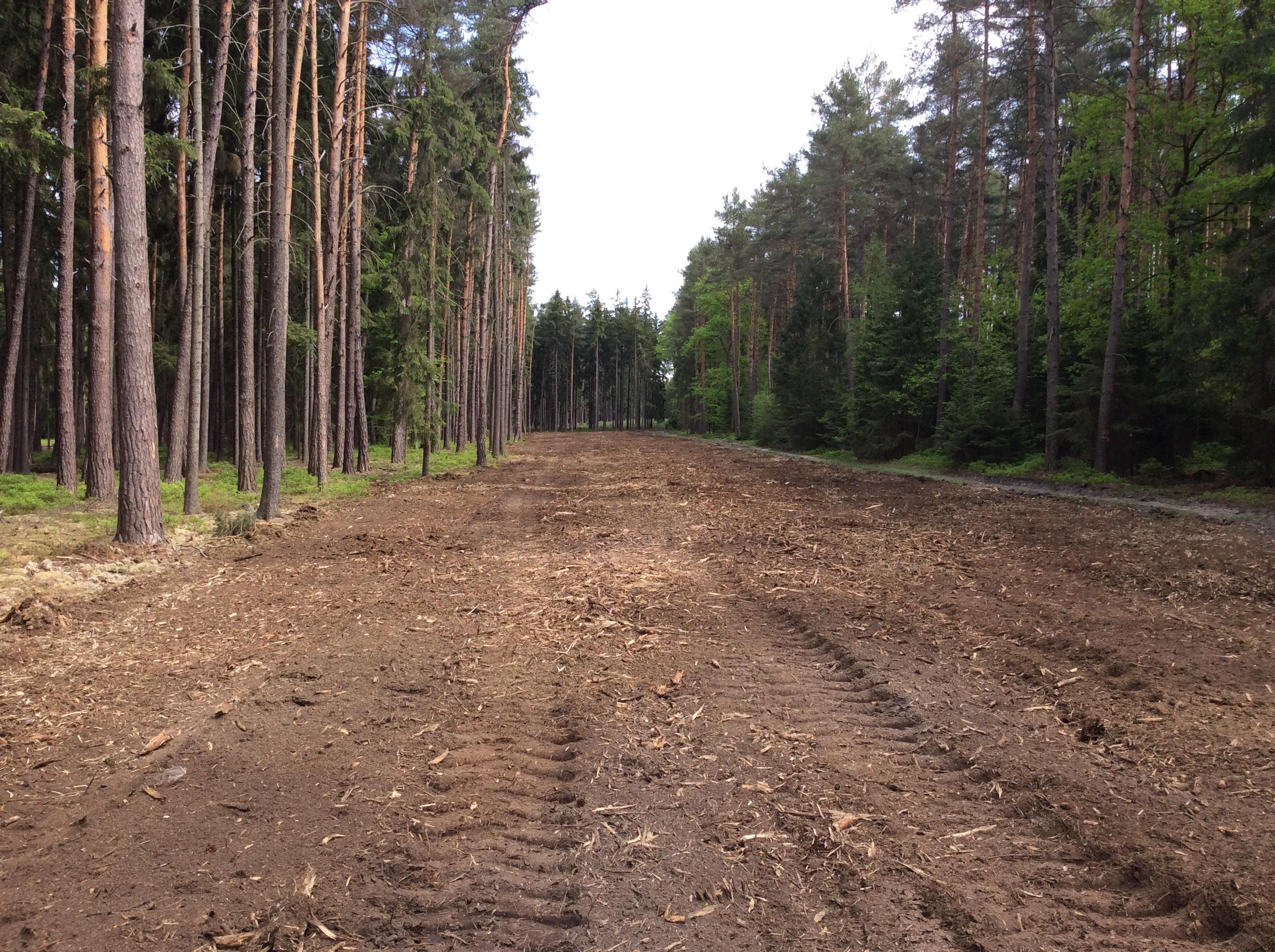 Po likvidaci lesního křoví