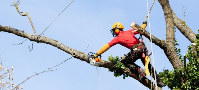 Rizikove kaceni stromu ve výškách.
