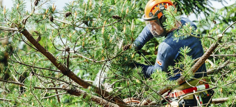 prorezavani-korun-stromu